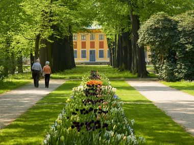 Planting along the avenue to the Riverside Palace at the Pillnitz Palace & Park