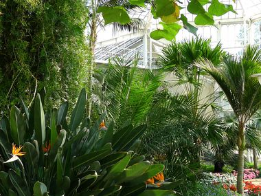 View into the Palm House
